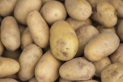 Potato. stock image