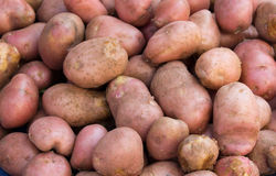 Potato on pile Royalty Free Stock Photography