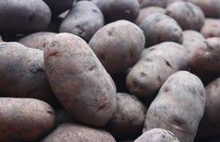 Potato pile studio shot Royalty Free Stock Images