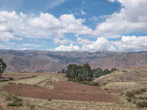 Potato plantation at Sacred Valley in Cusco Royalty Free Stock Photos