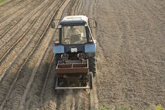 Potato planting Royalty Free Stock Photo