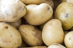 Potato. Can be described as a food that provides high quality protein and carbohydrates. Undoubtedly, it is deficient in some nutrients such as vitamin E stock images