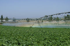 Potato production on irrigation by pivot center Royalty Free Stock Images