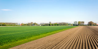 Potato ridges in a colorful Dutch rural landscape Stock Images