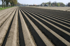 Potato ridges in Potato field, Netherlands Stock Photography
