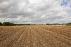 Potato rows Royalty Free Stock Image