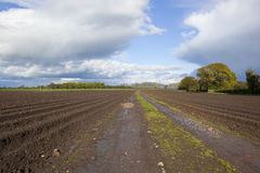 Potato rows in springtime Stock Photography