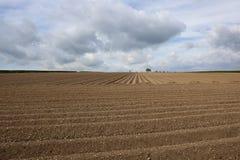 Potato rows in springtime Royalty Free Stock Image