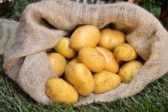 Potato sack Royalty Free Stock Images