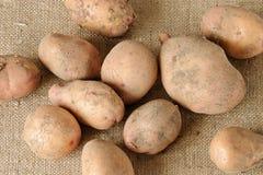 Potato on sacking. Potato harvest on burlap background Royalty Free Stock Photos