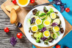 Potato salad with chicken eggs, leaves of oakleaf lettuce, basil Stock Photos