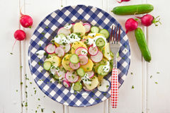 Potato salad with fresh cucumber. S and radishes Stock Photography