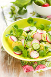 Potato salad with radishes Stock Images