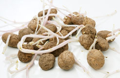 Potato seed Stock Images