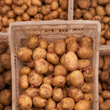 Potato seeds Royalty Free Stock Images