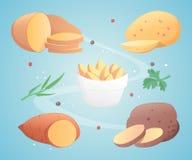 Potato set vector illustration. Eps10 Royalty Free Stock Images