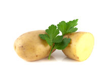 Potato sliced half and green parsley isolated. On white background Royalty Free Stock Image