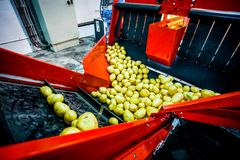 Potato sorting, processing and packing factory. Vegetable with big machine Stock Photos