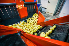 Potato sorting, processing and packing factory. Vegetable with big machine Royalty Free Stock Photo
