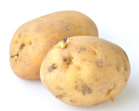 Potato with sprouts stock photography