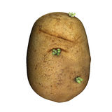 Potato. The potato is a starchy, tuberous crop from the perennial nightshade Solanum tuberosum L. The word potato may refer either to the plant itself or the royalty free stock photography