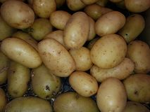 Potato. The potato is a starchy, tuberous crop from the perennial nightshade Solanum tuberosum. The word & x22;potato& x22; may refer either to the plant itself Stock Images