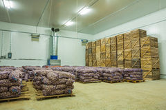 Potato in storage house Royalty Free Stock Photos