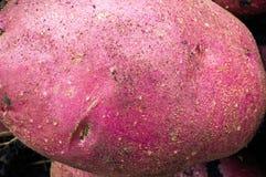 Potato texture Royalty Free Stock Photography