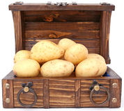 Potato - the treasure and currency of Ireland Royalty Free Stock Images