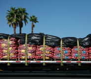 Potato truck and palm trees. Bags of potatoes on a flatbed truck with palm trees in the background Royalty Free Stock Image