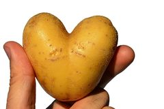 Potato tuber Solanum Tuberosum shaped like heart held in left hand of adult male man, white background. Afternoon summer natural sunlight Stock Photos
