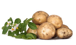 Potato tubers Royalty Free Stock Images