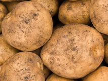 Potato tubers Stock Photo