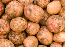 Potato tubers Stock Photos