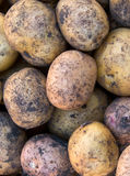 Potato tubers an abstract background Royalty Free Stock Photos
