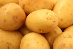 Potato tubers closeup Stock Images