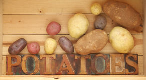 Potato varieties. The word potatoes in old wood type with assorted kinds of spuds Stock Images