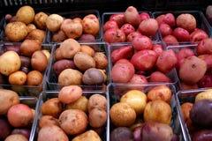 Potato Varieties Stock Images