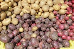 Potato Variety Display Stock Photo