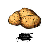 Potato vector drawing. Isolated hand drawn potatoes . Vegetable Royalty Free Stock Images