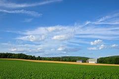 Potato and Wheat Field Stock Photos