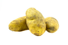Potato on white background. Raw potato on white background royalty free stock images