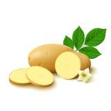 Potato on white background Stock Images