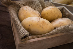Potato in wooden tray Stock Image