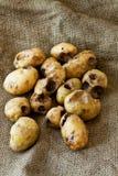 Potato worm Royalty Free Stock Photos