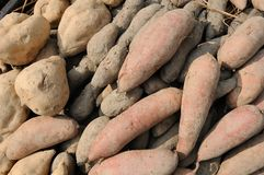 Potato and yam background Royalty Free Stock Images