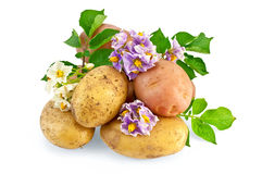 Potato yellow and pink with a flower Royalty Free Stock Photo