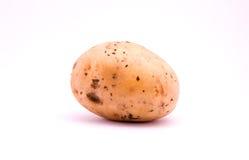 potatoe Royaltyfri Fotografi