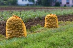 Potatoe袋子 图库摄影