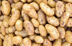 Potatoe background Stock Photos